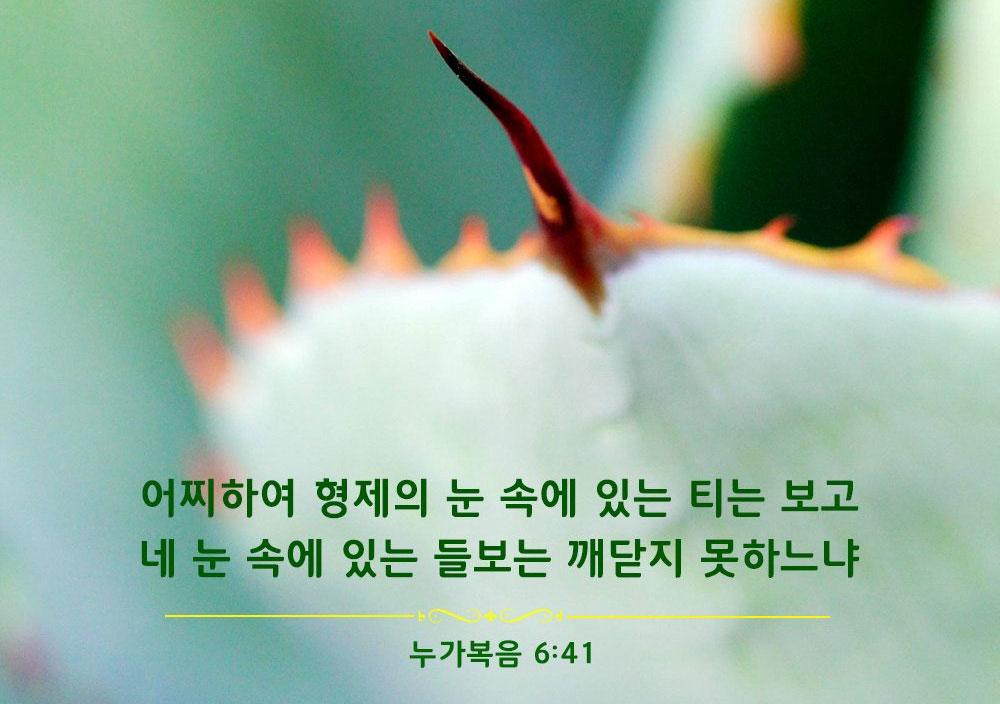 누가복음 6:41